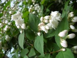 Backyard Blossoms 1