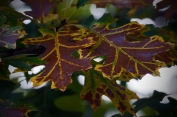 Dark Veins - Dark Vini