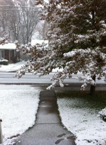 November 16 2014 - Oak Tree and Snow