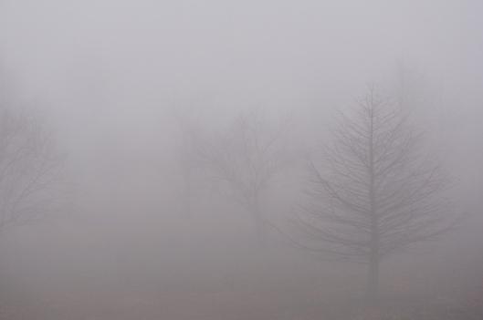 Fog 12112015-trees